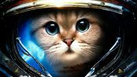 Фотография Eve.Cat